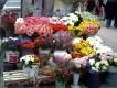Çiçekler [Mesut Çulak]