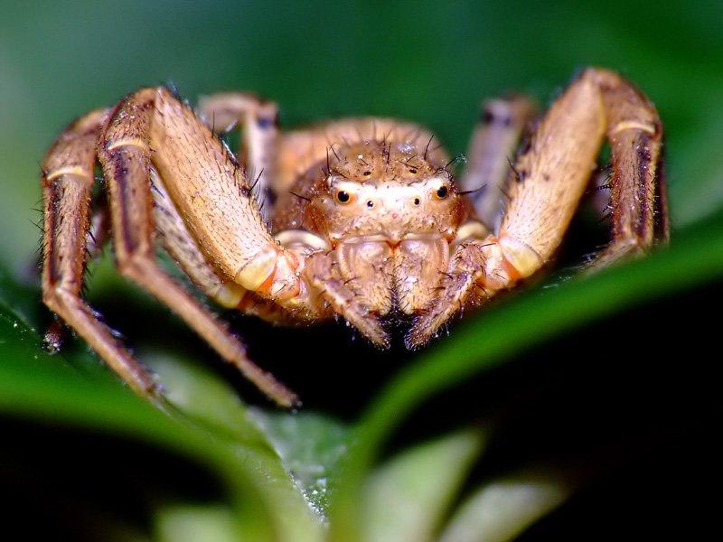 Örümcek 2 [Saim Dağ]