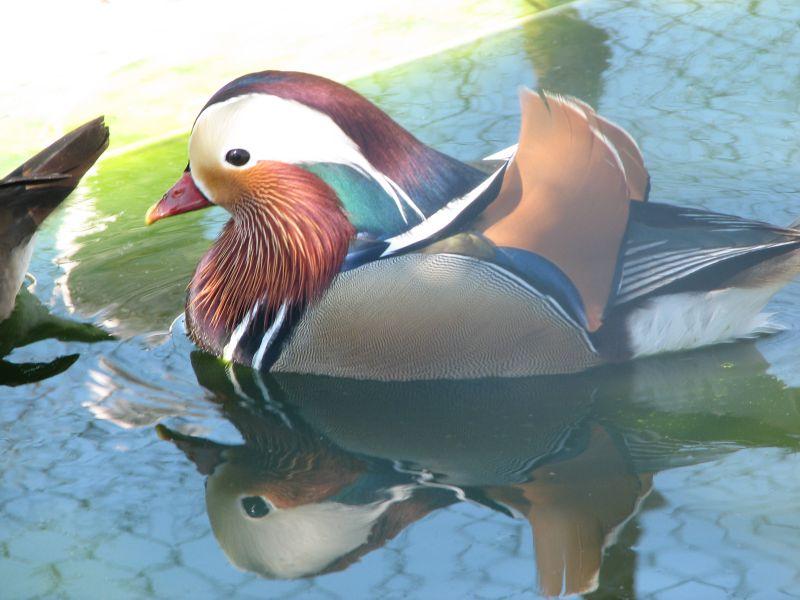 Uçan Ördek [Ümit R. Dinçer]