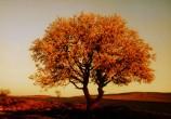 Badem ağacı [Gökhan Çelikcan]
